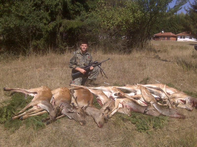 fallow_deer_bulgaria