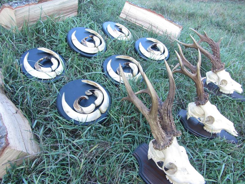 wild_boar_hunting_bulgaria