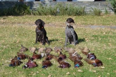 pheasant_hunting_bulgaria_2