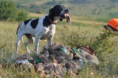 quail hunting bulgaria3