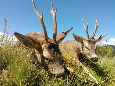 roe_deer_hunting_bulgaria1