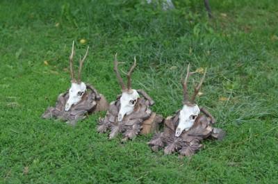 roe_deer_hunting_pereliytsa