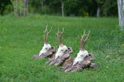 roe_deer_hunting_pereliytsa1