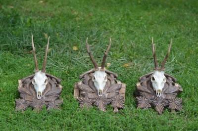 roe_deer_hunting_pereliytsa3
