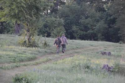 roe_deer_stalking_Ledenika1