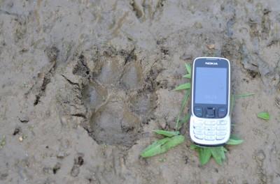 wolf_hunting_bulgaria1