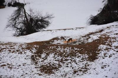 wild_boar_driven_hunting_bulgaria_6