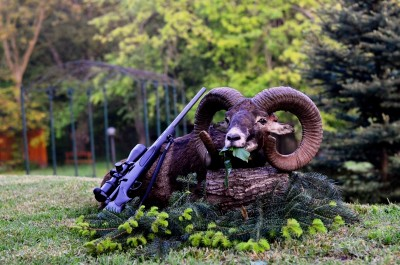 mouflon_hunting_in_Bulgaria11